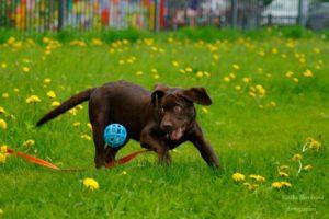 Проблемы в поведении щенка