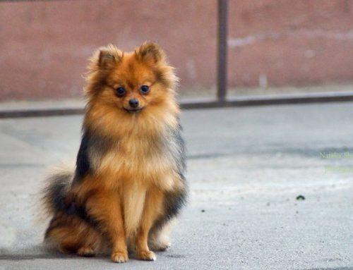 Мода на собак – развитие или регресс