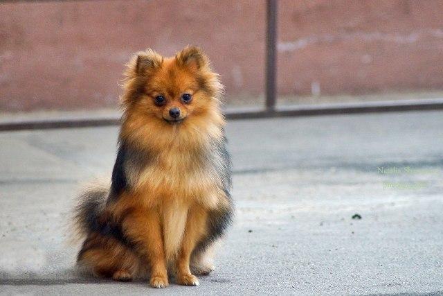 Мода на собак