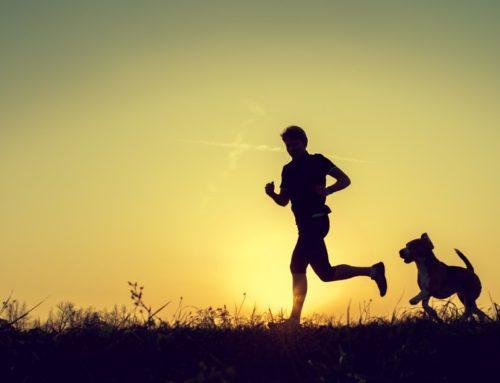Как сделать так, чтобы собака в доме вела себя спокойно