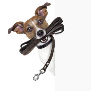 Подготовка к приему в семью собаки