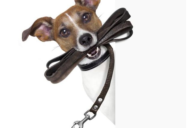 Техника дрессировки собак