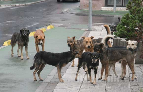 Чем занять собаку