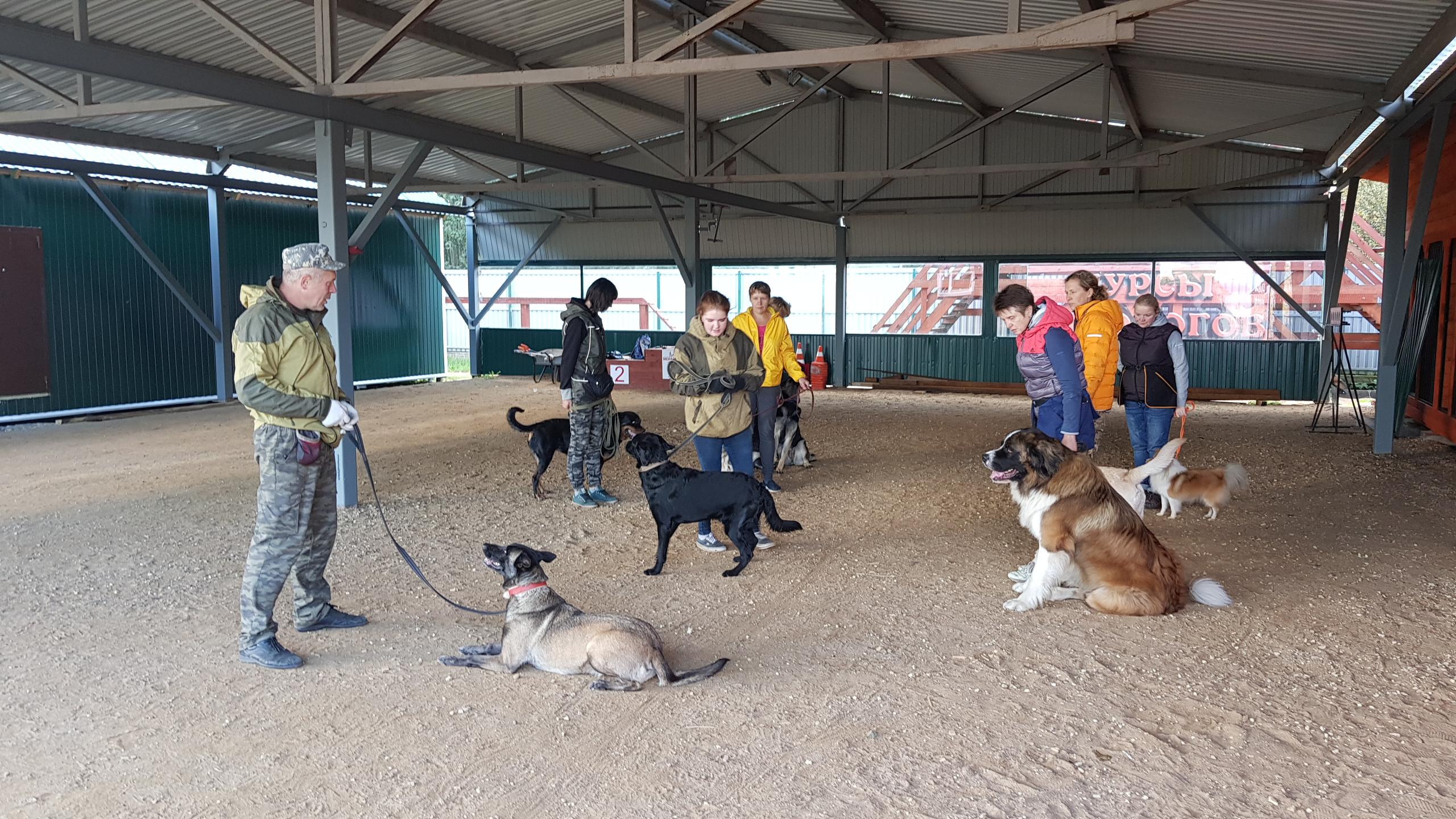 Групповые занятия с собакой, как должно быть