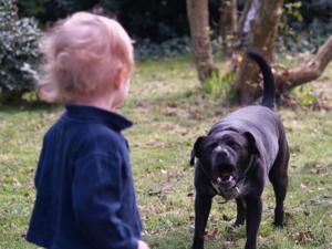 О нападении собак на людей