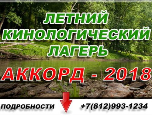 Летний кинологический лагерь: Аккорд — 2019