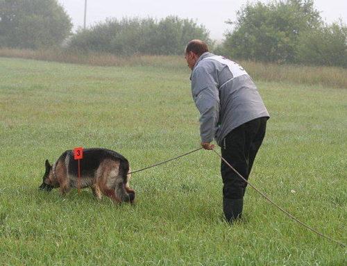 Следовая работа собаки