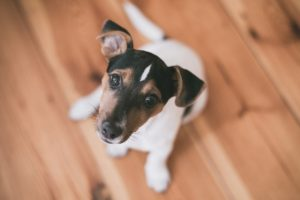 правила выбора породы собак