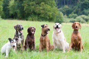 Базовые знания владельцам собак