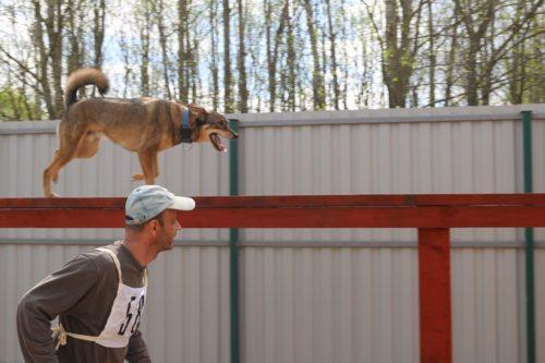 Как правильно приучать собак преодолевать препятствия