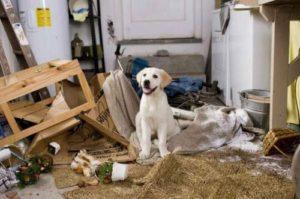 """Действительно ли собака знает, что """"так делать"""" нельзя?!"""