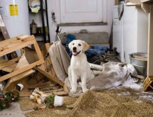 Действительно ли собака знает, что «так делать» нельзя?!