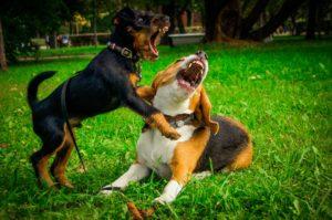 Различие дрессировки и воспитания собаки
