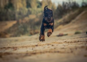 10 способов улучшить отношения со своей собакой