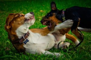 Групповые занятия с собакой