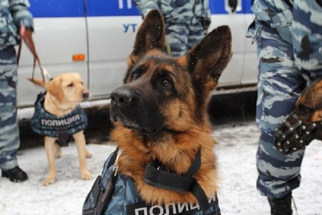 Полицейские собаки