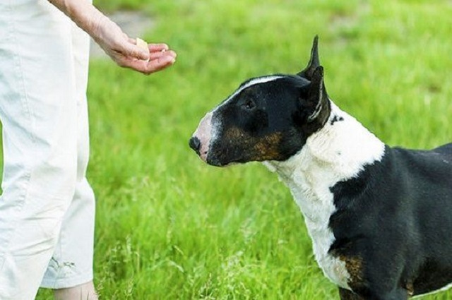 10 ошибок при дрессировке собак