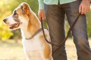 Как часто выгуливать собаку
