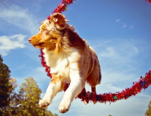 Как научить собаку трюкам
