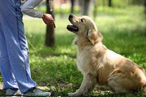 Послушание у собак