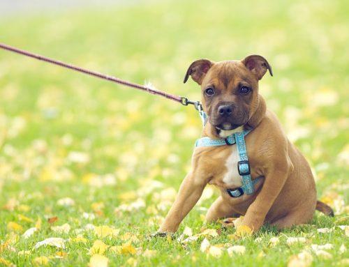 Построение отношений с вашей собакой!