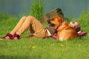 взаимоотношения с собакой