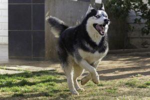 Содержание глухой собаки