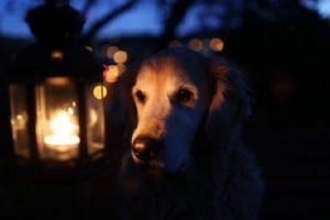 глухая собака