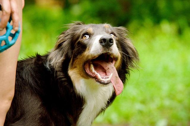 зрительный контакт с собакой