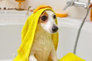 собаки не любят мыться