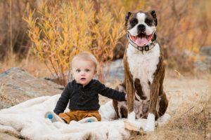 собака - телохранитель