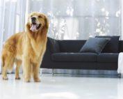 Домашняя дрессировка собак
