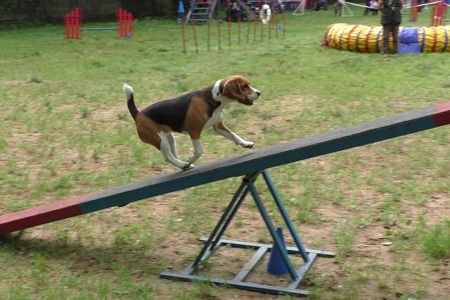 Спортивная дрессировка собак